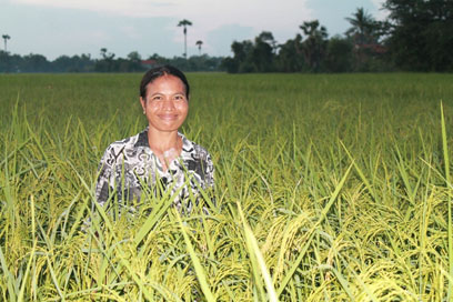 A Champion organic SRI farmer in Cambodia