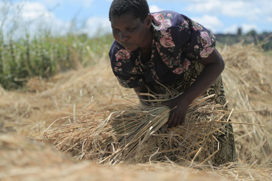 A system of rice intensification has changed mylife