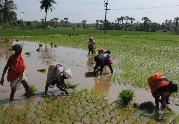 Women farmers need policyattention
